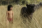 EventGalleryImage_The-Jungle-Book-004.jpg