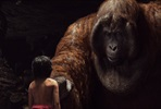 EventGalleryImage_The-Jungle-Book-007.jpg